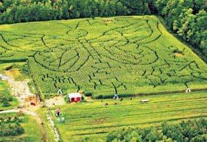 labyrinthe de mais